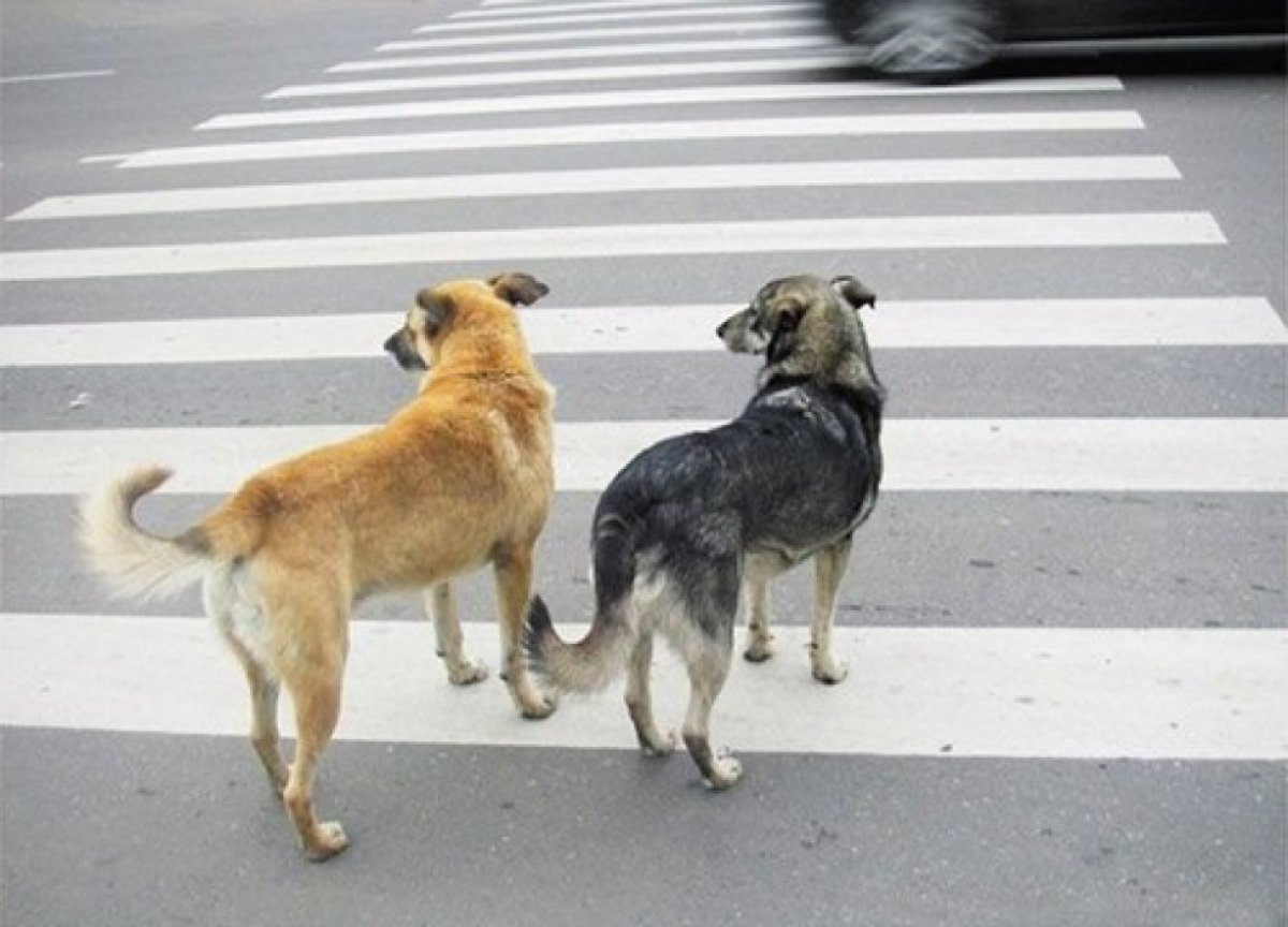 Собаку сбила машина